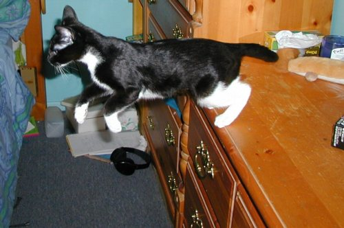 flying cat